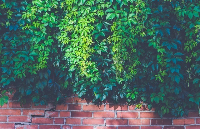 A beautiful brick and evergreen plant wall