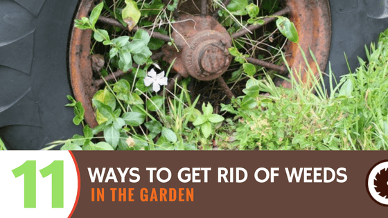 11 ways to get rid of weeds in the garden for How to get rid of weeds in garden