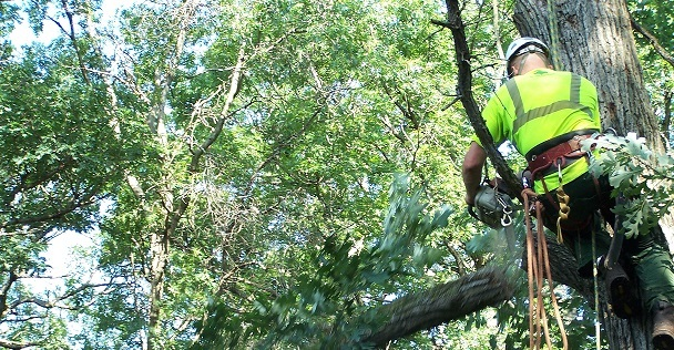 Why and How To Hire an Arborist