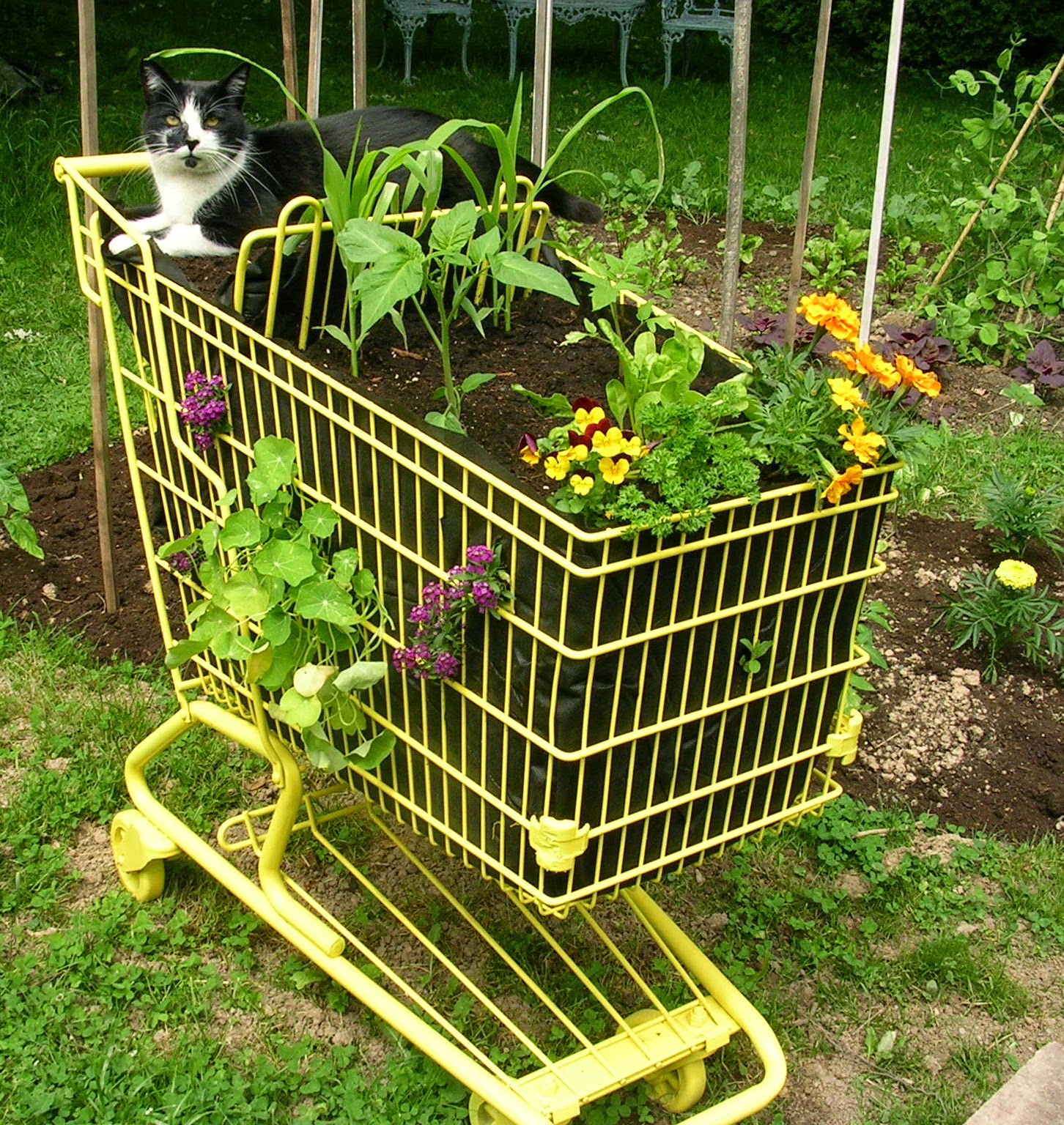 Container Gardening - Shopping Cart