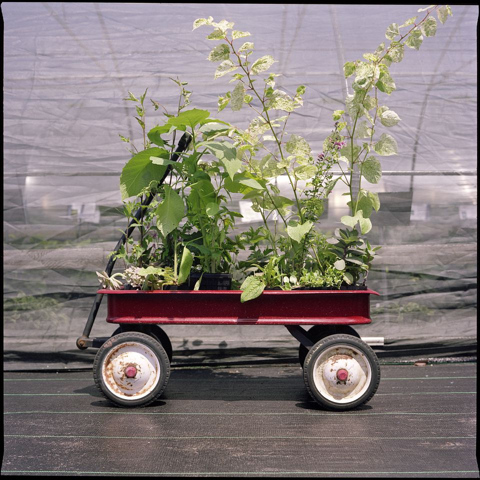 Container gardening - Acclimate plants