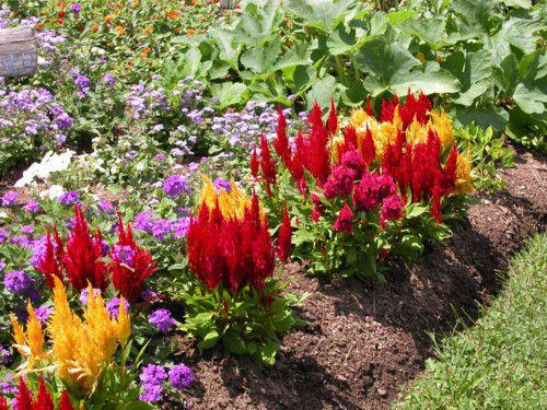 Container gardening - Annual and Perennial