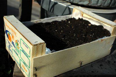 Container gardening - Fruit Crate