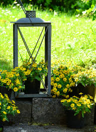 Container Gardening - Light