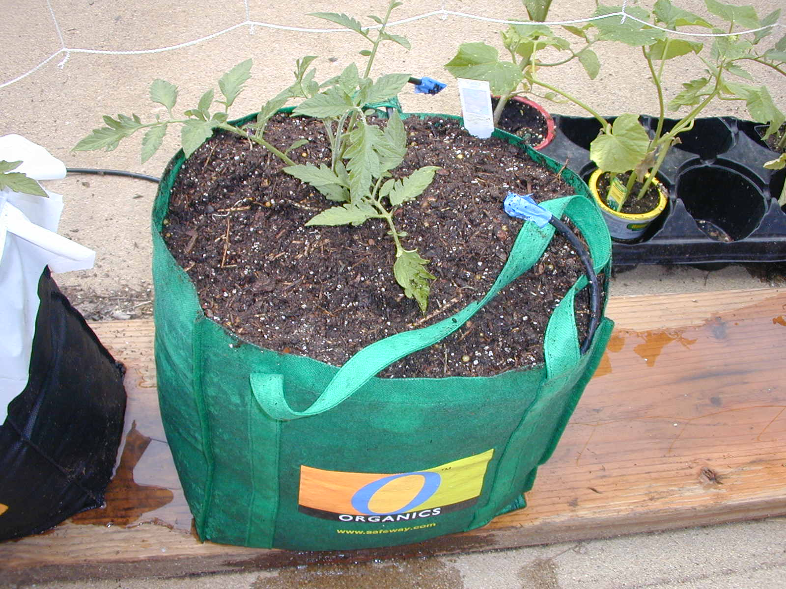 Container gardening - Shopping Bag