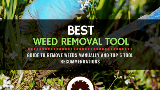 Featured Image - Best Weed Removal Tool