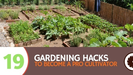 19 Gardening Hacks to Become a Pro Cultivator