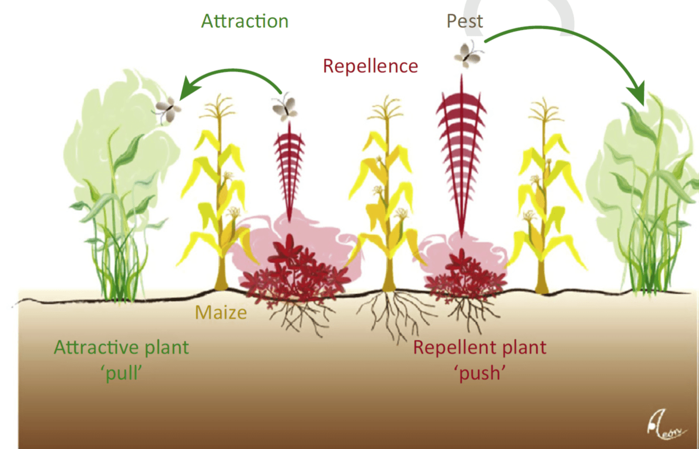Repellant Plants