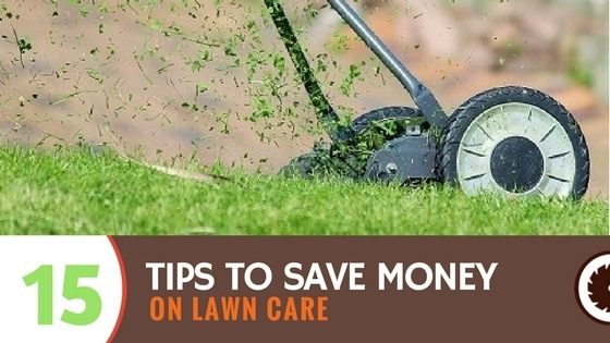 15 Tips to Save Money on Lawn Care