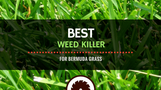 Best Weed Killer for Bermuda Grass Reviews