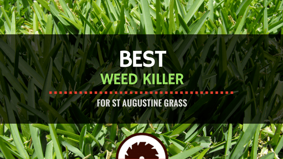 Best Weed Killer for St Augustine Grass