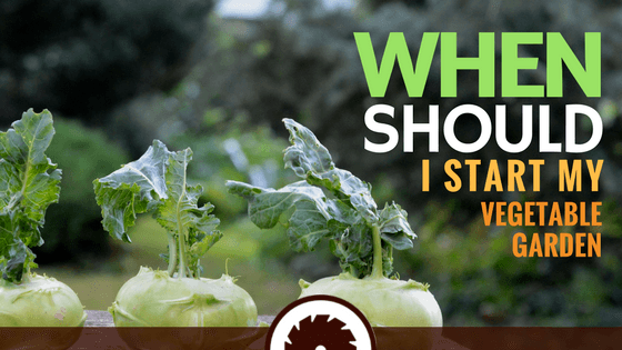 When Should I Start My Vegetable Garden_