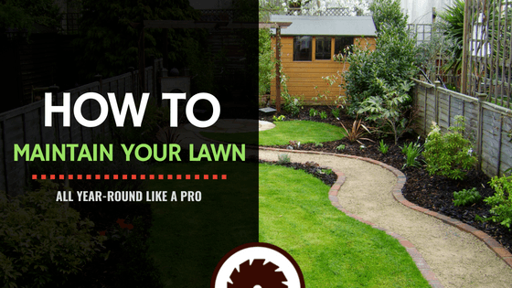 How to Maintain Your Lawn - All Year-Round Like A Pro