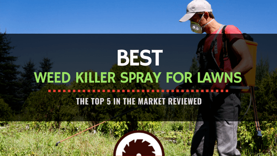 Best Weed Killer Spray For Lawn