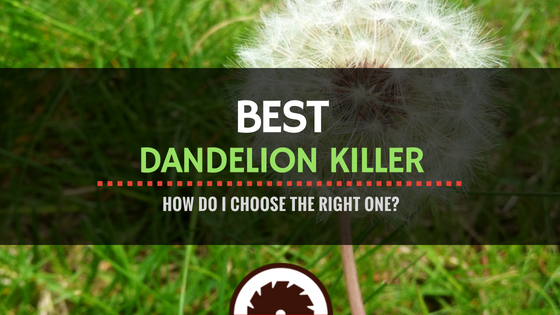 Best Dandelion Killer Reviews - Featured Image