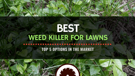 Featured Image - Best Weed Killer for Lawns