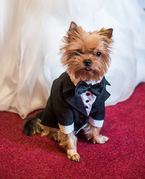 Dog-Formal-Suit