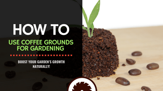 Blog for How to use coffee grounds in garden