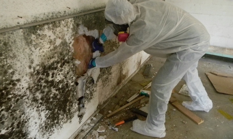 a professional removing black mold