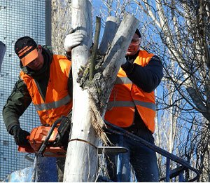 safe-tree-cutting